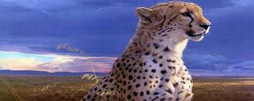 cheetahtm