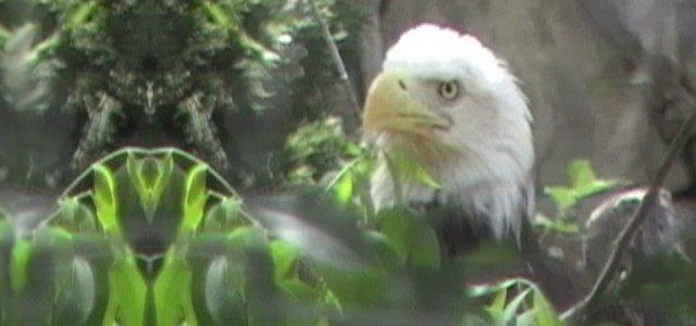eagle1tm