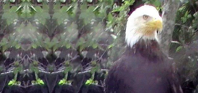 eagle2tm