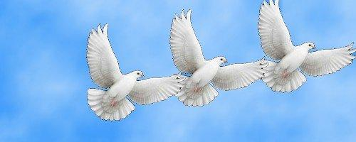 flying white dove