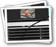 Achat vente d oiseaux en wallonie