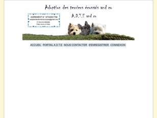 Adoption des terriers ecossais westie cairn Scottish