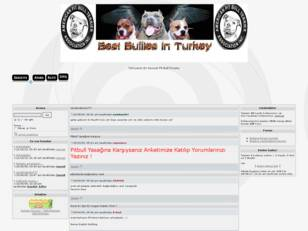 BEST PİTBULLS İN TURKEY