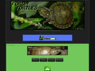 FORUM TORTUES