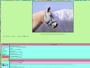 Forum gratuit : Cheval appaloosa