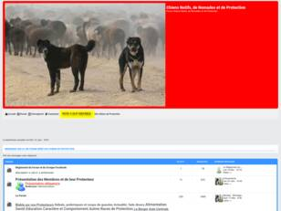Forum Chiens de Protection Sarplaninac, Caucase, Dogue du Tibet ect