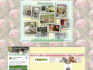 Forum du golden retriever  et le site du  golden retriever.