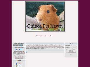 Guinea Pig Haven Forum