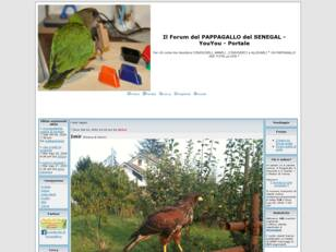 Forum gratis : Pappagallo del SENEGAL