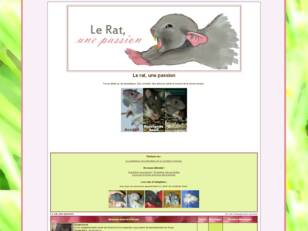 Le rat, une passion