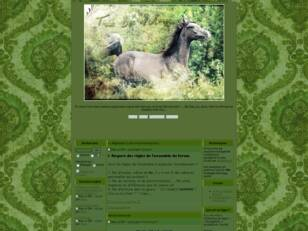 creer un forum : True Life of Horse
