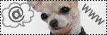 Forum Chihuahua : Mini Dog's Chihuahua 200597vos_liens