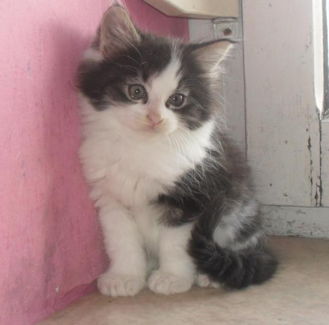 Photos de petite chatte