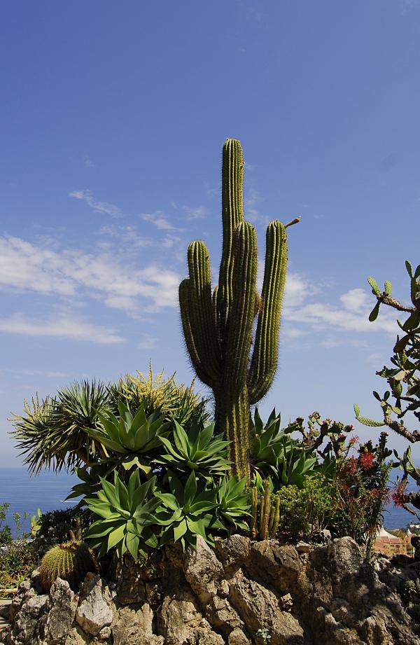 Jardin exotique de Monaco 221944_DSC0210