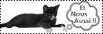 Forum Chihuahua : Mini Dog's Chihuahua 222345autre_animaux