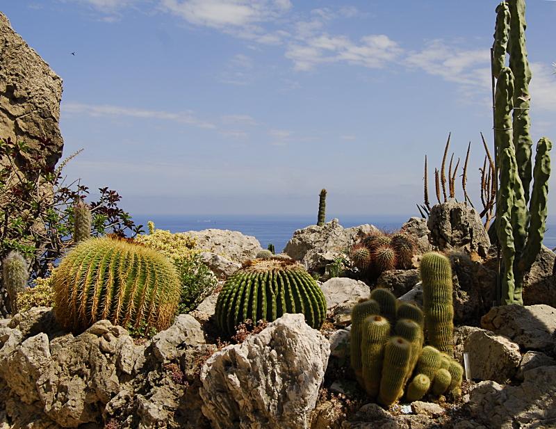 Jardin exotique de Monaco 272978_DSC0207