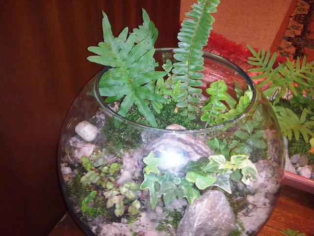LES TERRARIUMS 347050Photo009_2