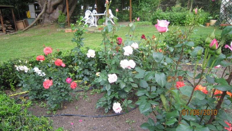 Mon jardin et moi... - Page 2 359823IMG_0934__800x600_