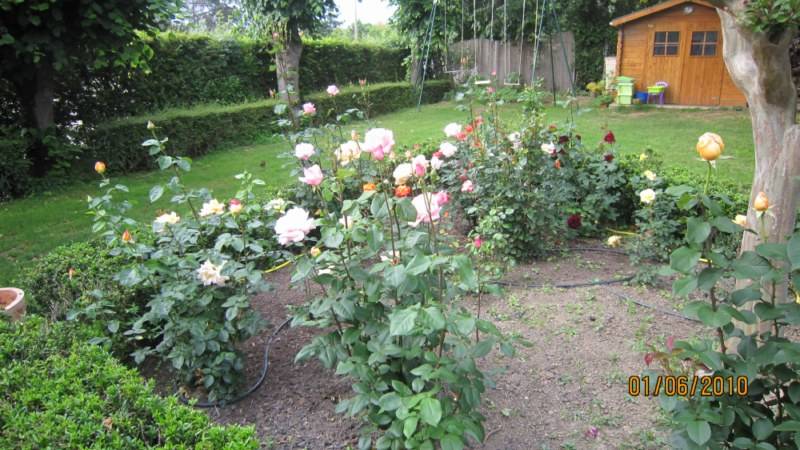 Mon jardin et moi... - Page 2 395460IMG_0933__800x600_