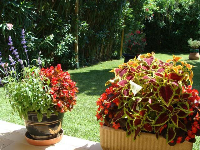 idee jardiniere 478613italie273