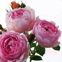 (10 novembre 1457 à...) 4903322245606_1350_rectifiee4