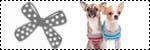 Forum Chihuahua : Mini Dog's Chihuahua 513261icone_mode_