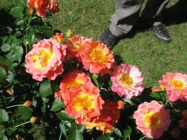 altera rosa 2010 573859bal_musette