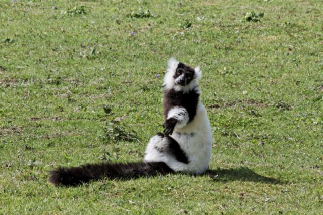 Le Parc des Félins en Seine et Marne 577448Parc_des_felins_avril_2010__RAW_211_DxO_raw__800x600_