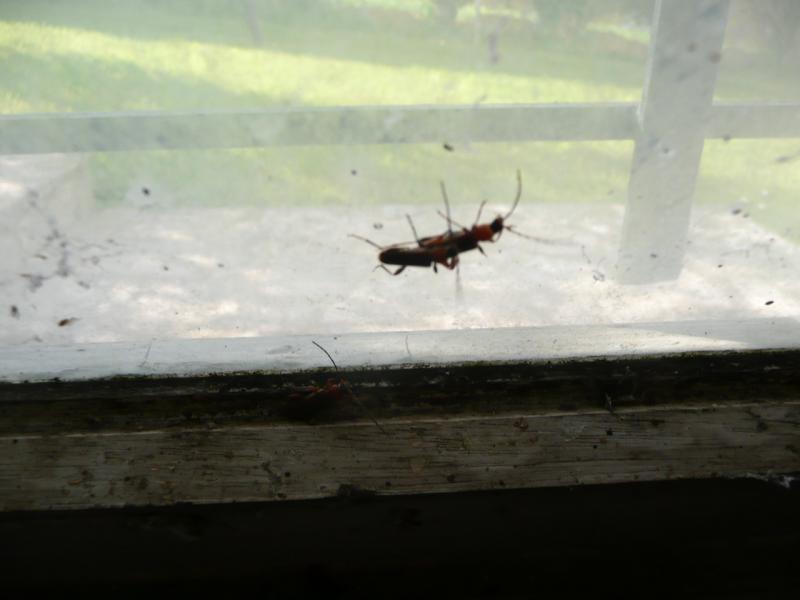 qu 39 est ce que cet insecte sur mon bois de chauffage. Black Bedroom Furniture Sets. Home Design Ideas