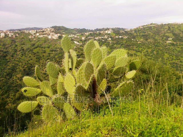 De belles photos de Tizi ouzou et les montagnes de Djurdjura 599464Photos_0053