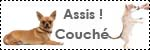 Forum Chihuahua : Mini Dog's Chihuahua 606936icone_education