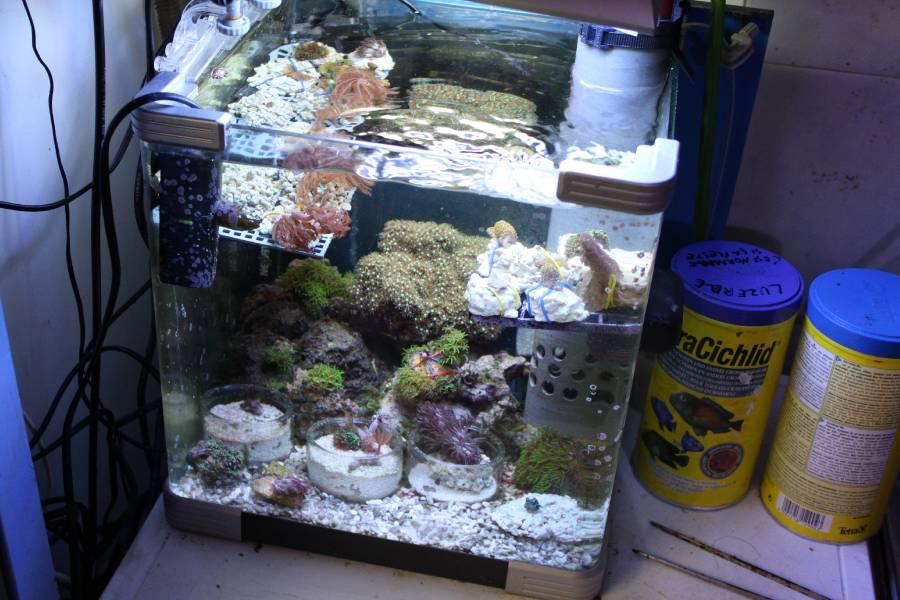 je risque fort de devenir une sardinne - Page 12 649520PXR_IMG_0056