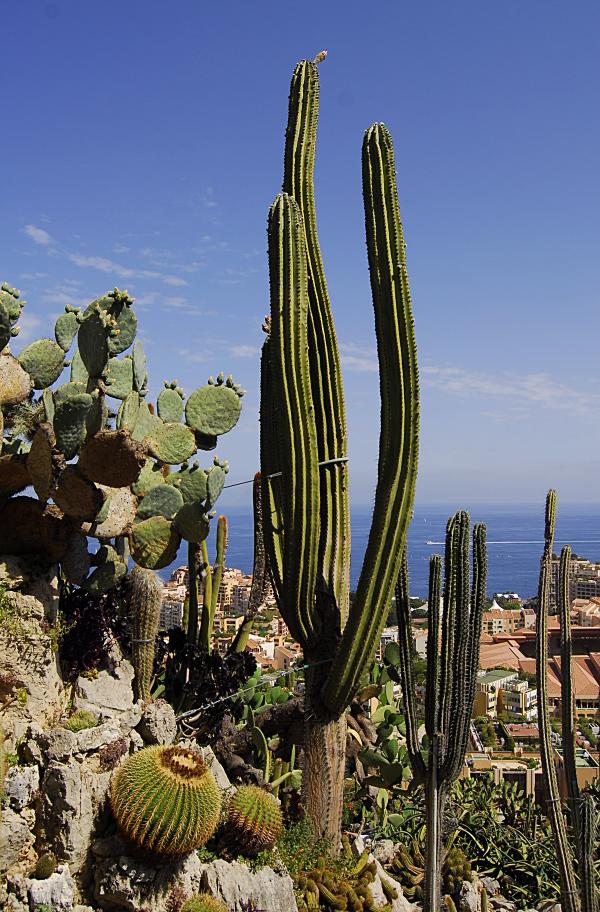 Jardin exotique de Monaco 665235_DSC0221