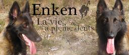 laisse - Balade sans laisse.. Violence envers mon chien - Page 5 696425Enken