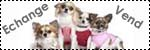 Forum Chihuahua : Mini Dog's Chihuahua 698435vente_particulier1