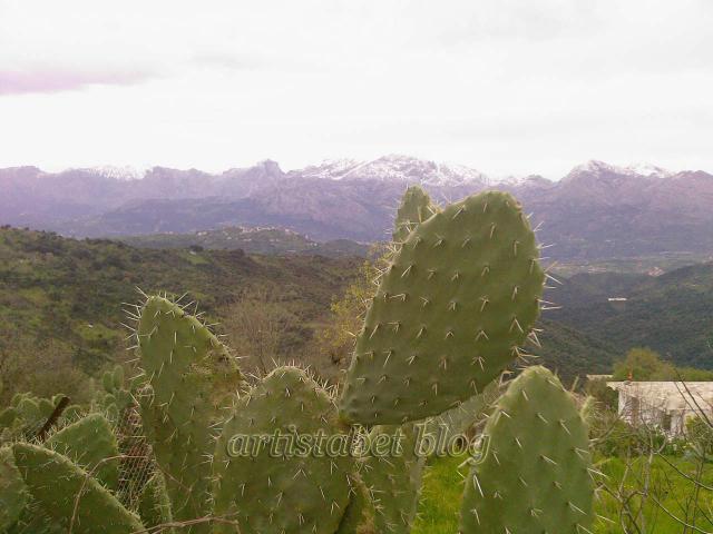 De belles photos de Tizi ouzou et les montagnes de Djurdjura 743062Photos_0063