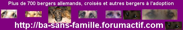 ba-sans-famille - Portail 759948basansfamille