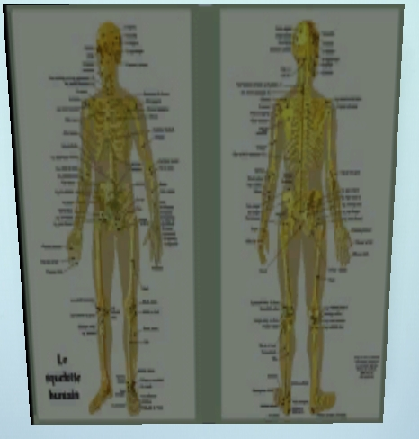 Mes créations 789633un_squelette
