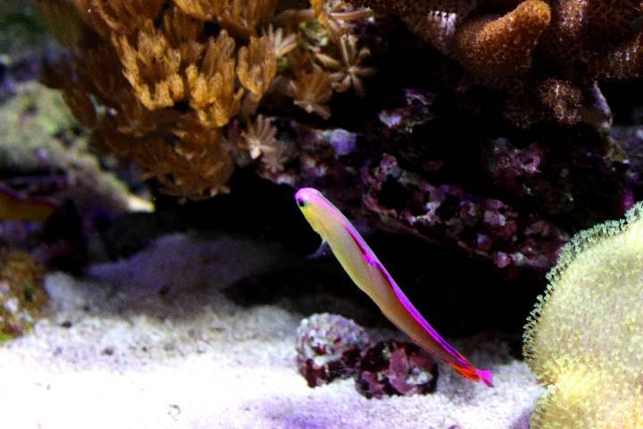 je risque fort de devenir une sardinne - Page 12 800625PXR_IMG_0064