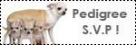 Forum Chihuahua : Mini Dog's Chihuahua 810780elevage