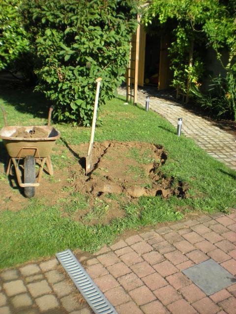 bassin pour tortue d eau 812596DSCN1085