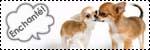 Forum Chihuahua : Mini Dog's Chihuahua 853850icone_rencontre