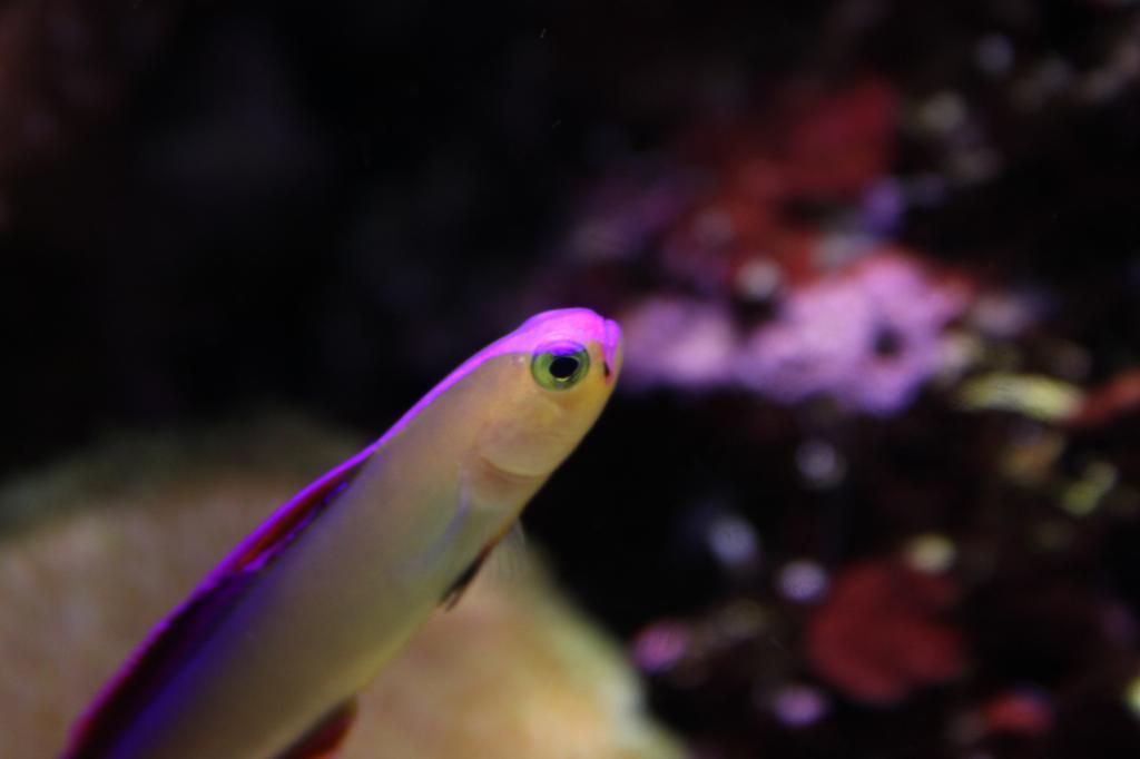 Aquarium 855464IMG_0037