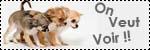 Forum Chihuahua : Mini Dog's Chihuahua 862707montrez_nous