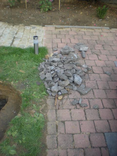 bassin pour tortue d eau 895606DSCN1094