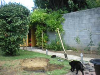 bassin pour tortue d eau 904141DSCN1089