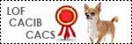 Forum Chihuahua : Mini Dog's Chihuahua 921156expo