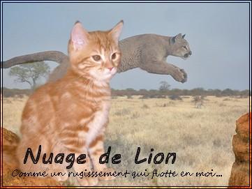 Petit Lion [REUSSI] 969115apprentiexamcrea3
