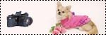 Forum Chihuahua : Mini Dog's Chihuahua 994474ses_photos