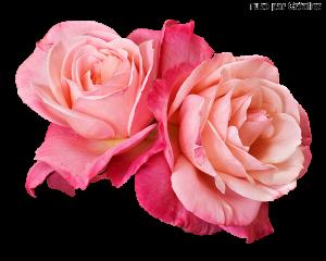 Fleurs Mini_1197945420541